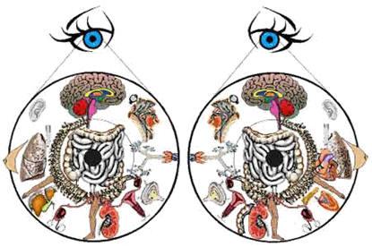 Иридодиагностика схема радужной оболочке глаза 438