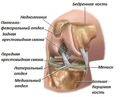 Полная замена коленного сустава (Total Knee Replacement)