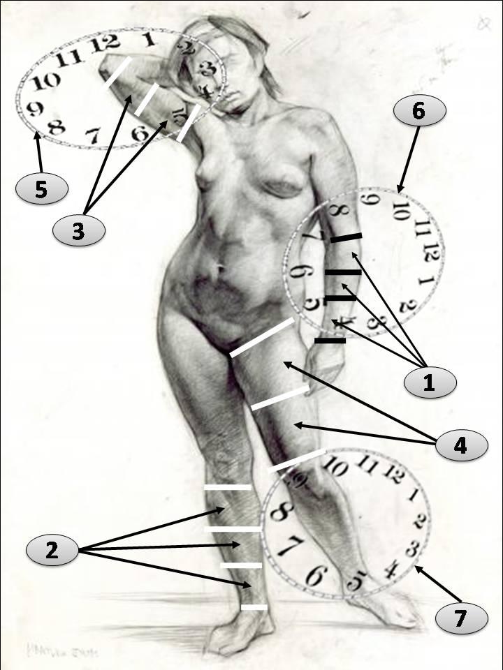 Мышечно- фото