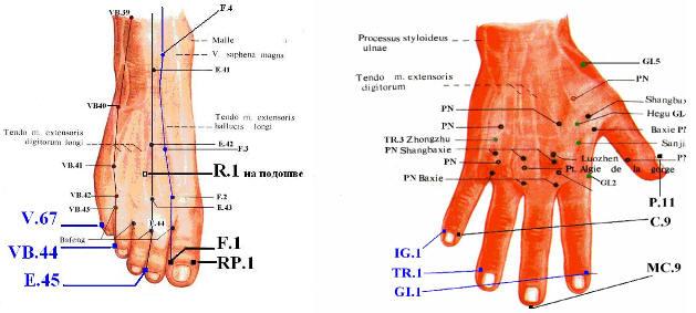 Анатомическое расположение