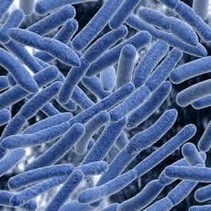 ВОЗ обновила список самых опасных супербактерий в мире