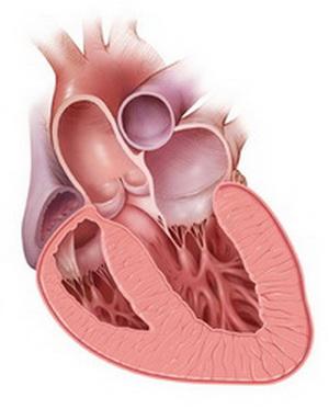 Сердечную недостаточность можно лечить магнием
