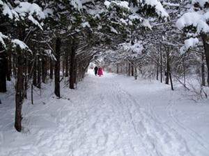 Люди, которые часто ходят пешком, почти вдвое реже заболевают простудой