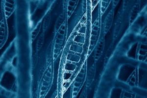 Большая часть генома человека оказалась бесполезной