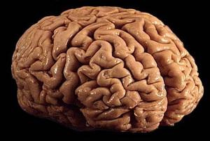 Мозг возможно регенерировать даже в старости