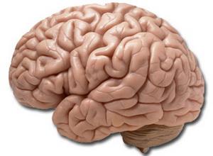 В развитии слабоумия виноваты вирусы в мозге человека