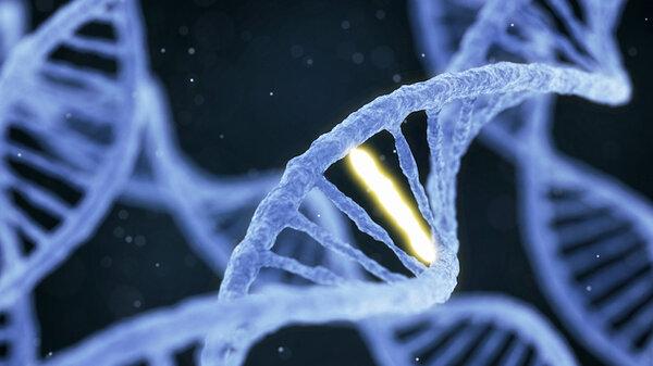 Исследователи обнаружили неоднозначную мутацию в геноме некоторых людей
