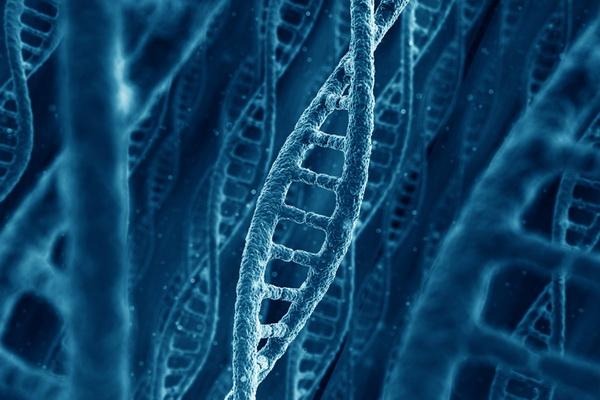 Выносливость определена генами