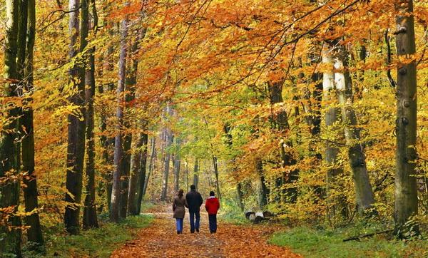 Прогулка в лесу расслабляет лучше медитации