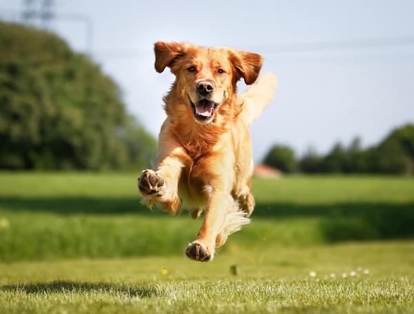 Собак тоже заставят соблюдать социальную дистанцию