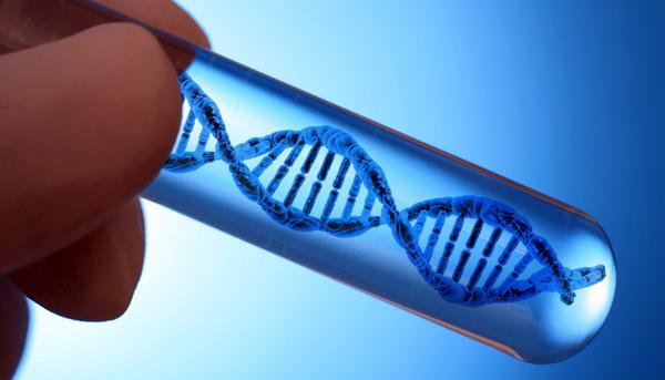"""Найдена """"ДНК левши"""". Их мозг устроен иначе, чем у правшей"""