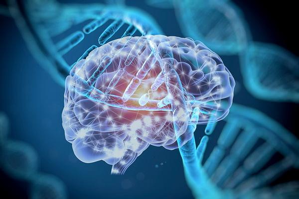 Черты характера и моральные установки во многом обусловлены генами