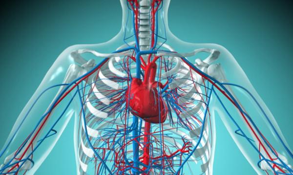 Ученые определили источник пороков развития кровеносных сосудов