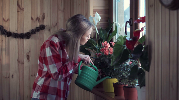 Комнатные растения не очищают воздух