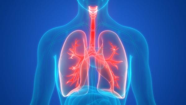 Ученые впервые обнаружили жир в легких и дыхательных путях